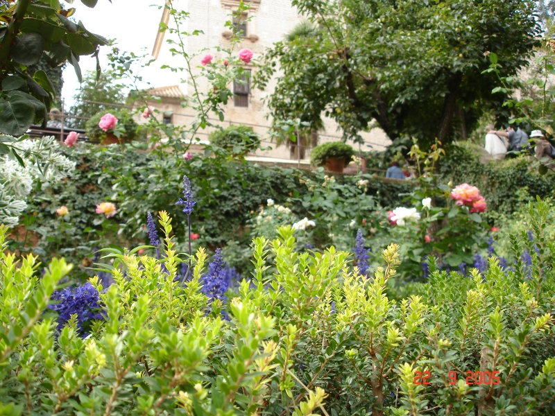 L espagne des plantes des arbres et des fleurs for Arbres plantes fleurs