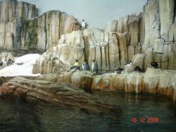Pingouins, ou plutôt des manchots, Biodôme de Montréal 2006.