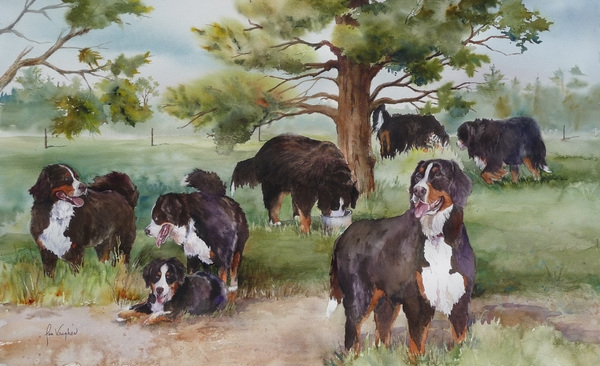 Bernese play date