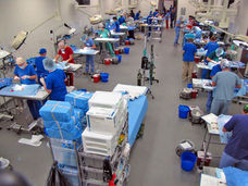 Operation Catnip mass spay/neuter clinic