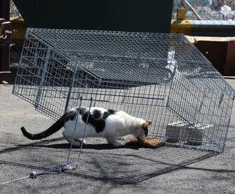 Feral Cat Box Trap