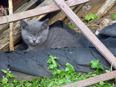 Tips for trapping kittens