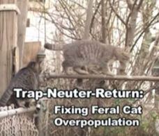 Trap-Neuter-Return: Fixing Feral Cat Overpopulation