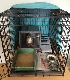 Feral Cat Setup with den