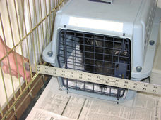 Barring carrier door in Feral Cat Setup