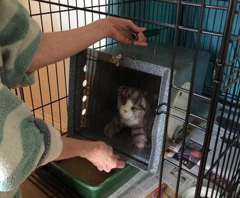 Place den inside Feral Cat Setup