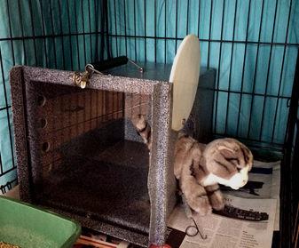 Cat exiting the den