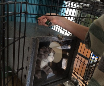Place den back inside the cage