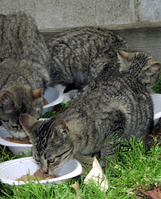 Kinds of food for feral cats