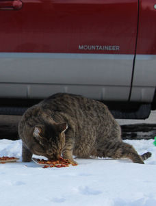 Cats need more food in winter