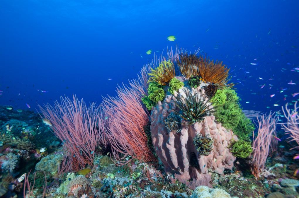 6 Corales
