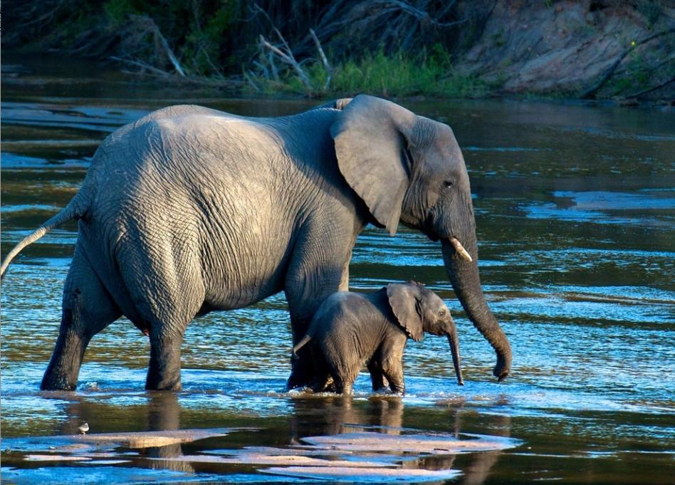 3 Elefante africano