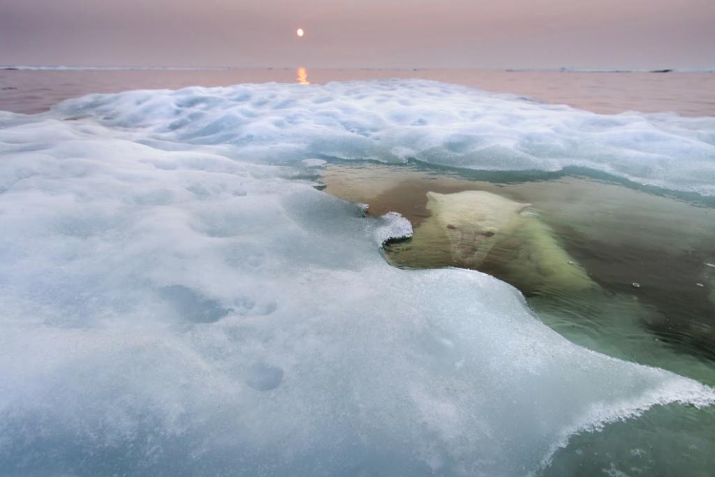 2 Osos polares