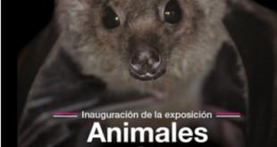 animales insolitos