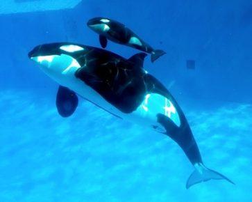 orca-da-luz