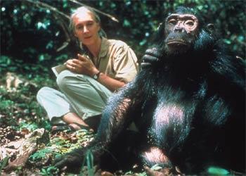 Foto 1 Jane Goodall 80´s