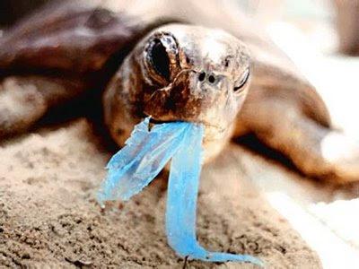 Foto 5 turtle plastico azul[1]