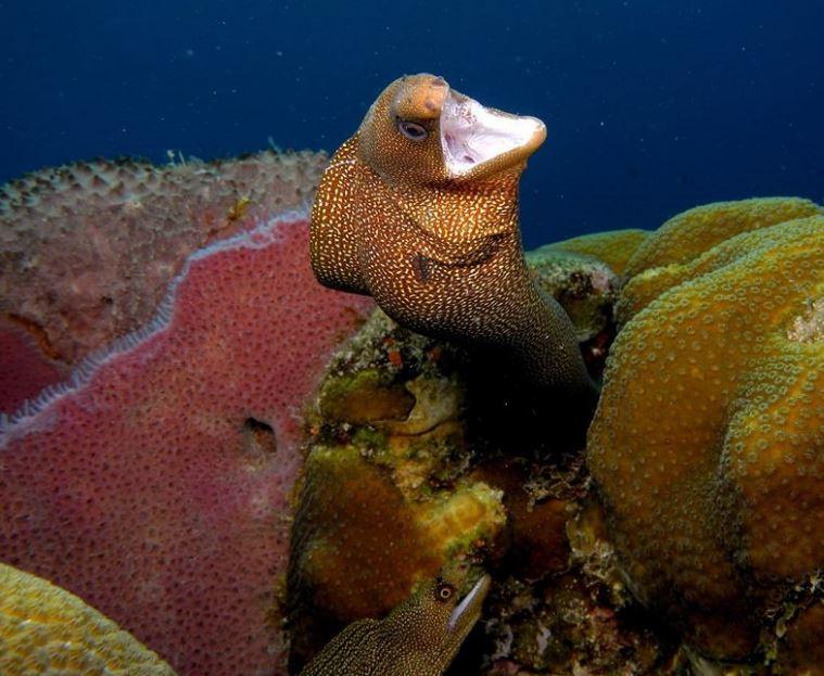 Foto 4 Morena coral