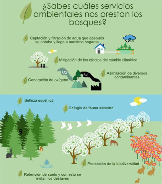 foto-5-servicios-ambientales-bosque