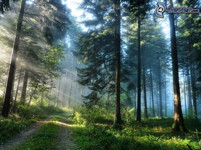 foto-6-bosques