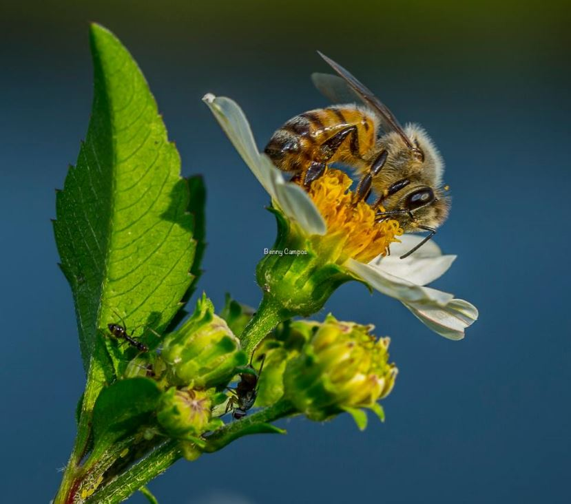 foto-7-abeja-1