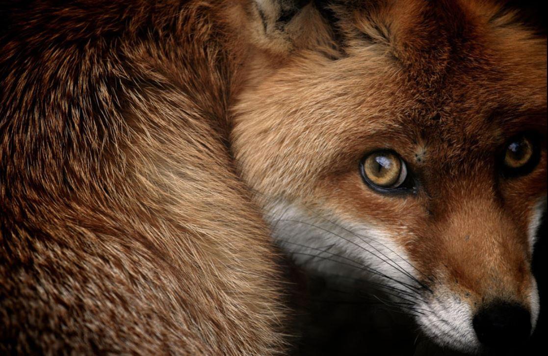 foto-6-zorro