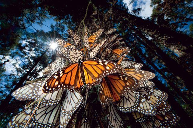 foto-5-monarcas