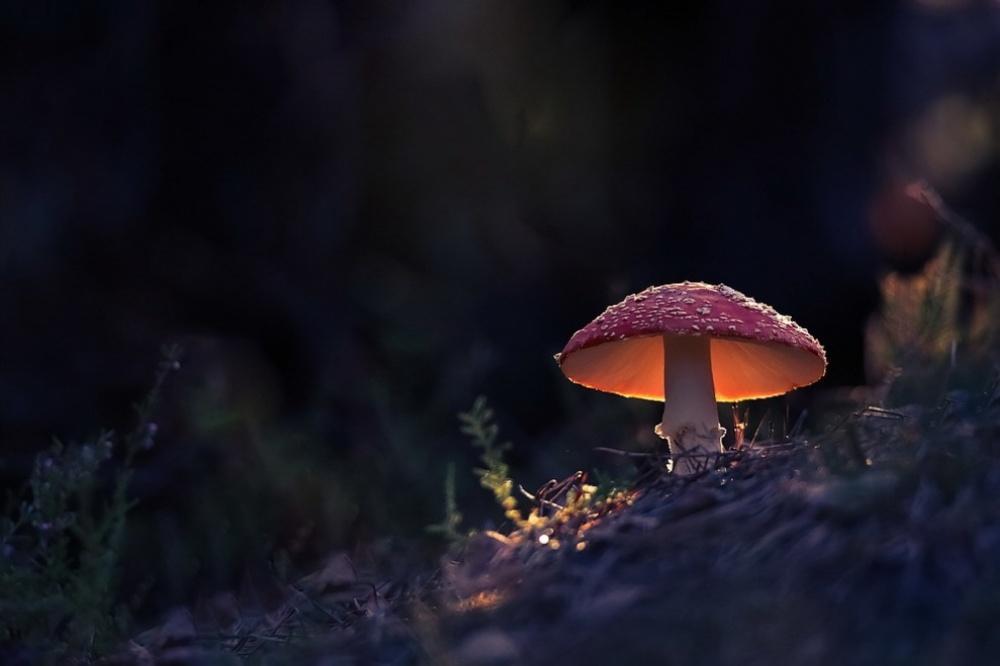 foto-1-hongo-en-el-bosque