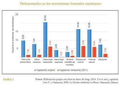 foto-2-deforestacion