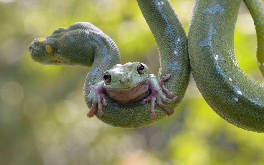 foto-6-convivir-con-la-serpiente