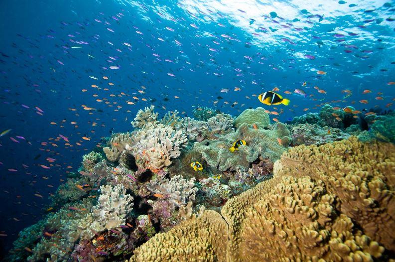 foto-3-arrecife-mw