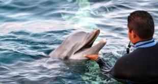 show delfines