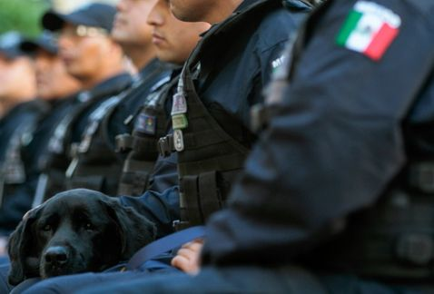 polis-federales
