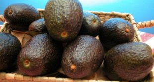 aguacate_3