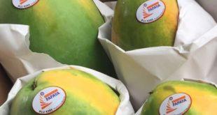 papaya-EU
