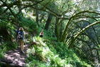 Matt Davis Trail (down from Mt. Tam)