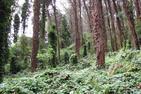 Mount Sutro (Stanyan Trailhead)