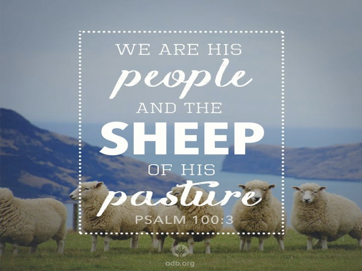Brandon Renfroe – Psalm 100–The Sheep of His  Pasture