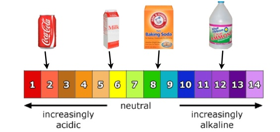 Ph Scale With Food Examples
