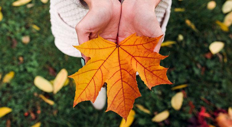 Fall Selling Season