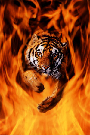 2400-1337~Bengal-Tiger-Jumping-Flames-Po