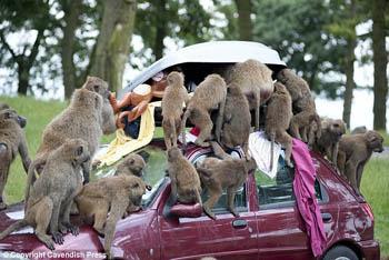 Monkey Steal!