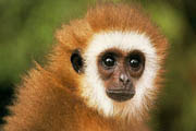 All About Animals :: Monkeys