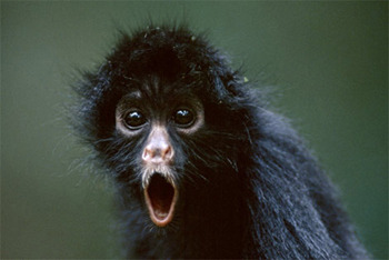 Monkey See!