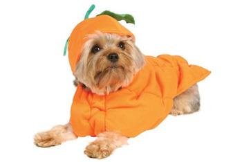 Pumpkin costume, $15.99, BuyCostumes.com