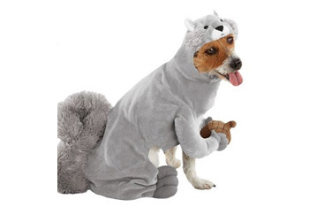 Squirrel pet costume, $9, Target.com