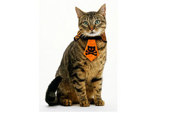 Halloween Cat Necktie with skull and crossbones, $3, WalMart.com