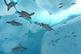 Micro_ocean-article