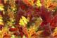 Micro_leaves_micro