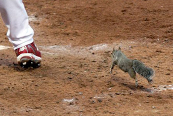 Busch the Rally Squirrel